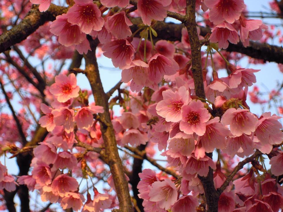 5月28日、本会千葉県支部が片倉佳史氏を講師に講演会【締切:5月20日】