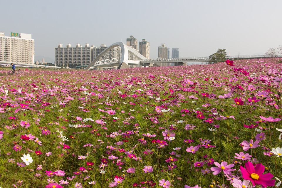 【祝】東武鉄道と台湾鉄路管理局が12月18日に友好鉄道協定を締結