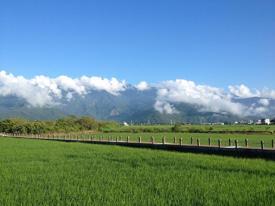 台湾ウイスキー「KAVALAN」#2、後発組にこそある強み 武田安恵(日経ビジネス記者)